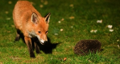 Litigation Superforecasting, Part 2: hedgehogs and foxes